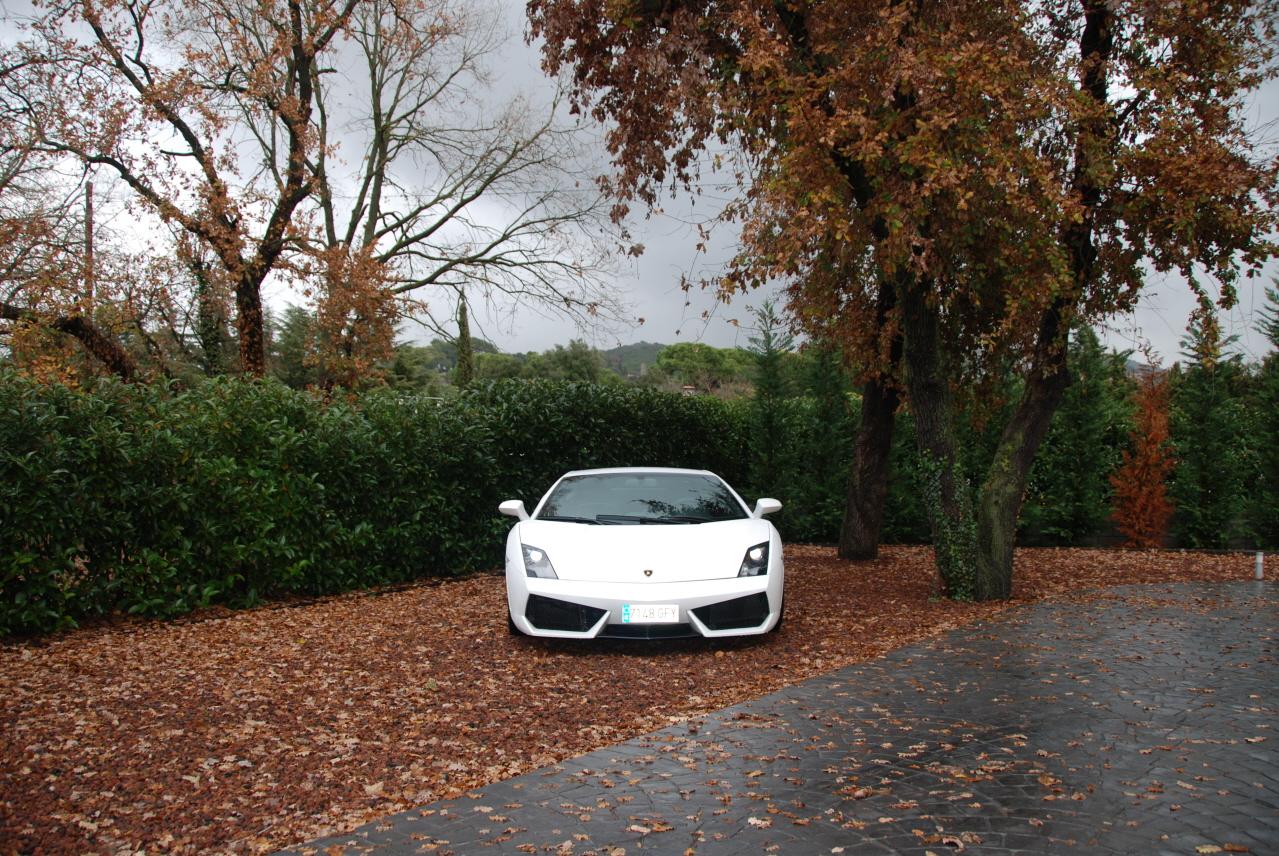 lamborghini-Lamborghini.JPG